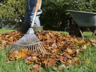 Tips voor het aanleggen van graszoden