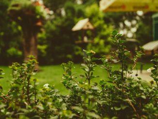 Zó maak jij je tuin tot een paradijs