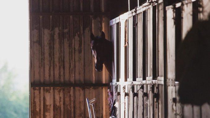 Paardenstal bouwen