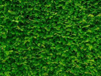 Tips voor een groen kantoor