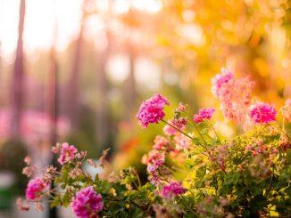 3x tips om de tuin op te fleuren
